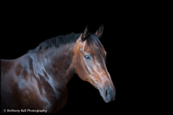 Christmas-Present-Equine-Photoshoot